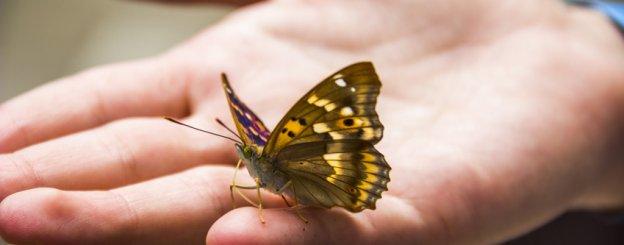 Mariposa De Colores Su Simbología Y Sus Mensajes Espirituales